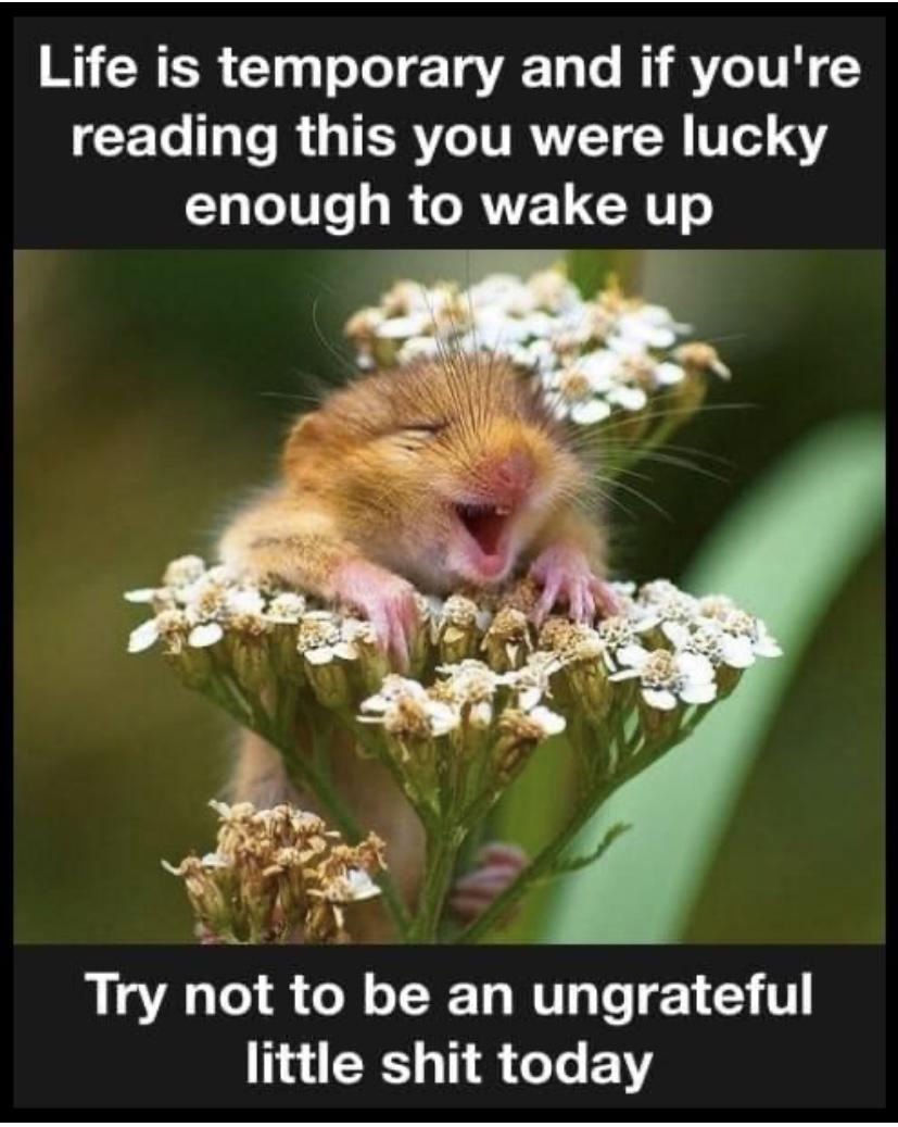 Life is temporary and if you're reading this you were lucky enough to wake up Try not to be an ungrateful little https://inspirational.ly