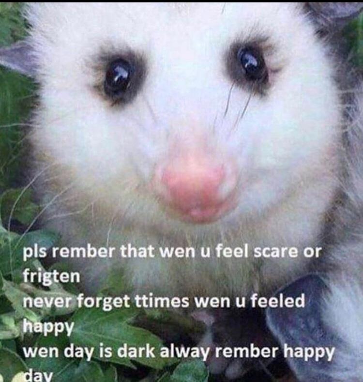 [Image] Motivational Possum