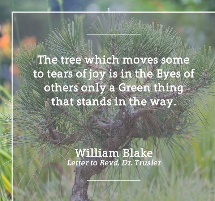 """The tree which moves some to tears of joy is, in the eyes of others, only a green thing that stands in the way."" – William Blake 695 X 651"