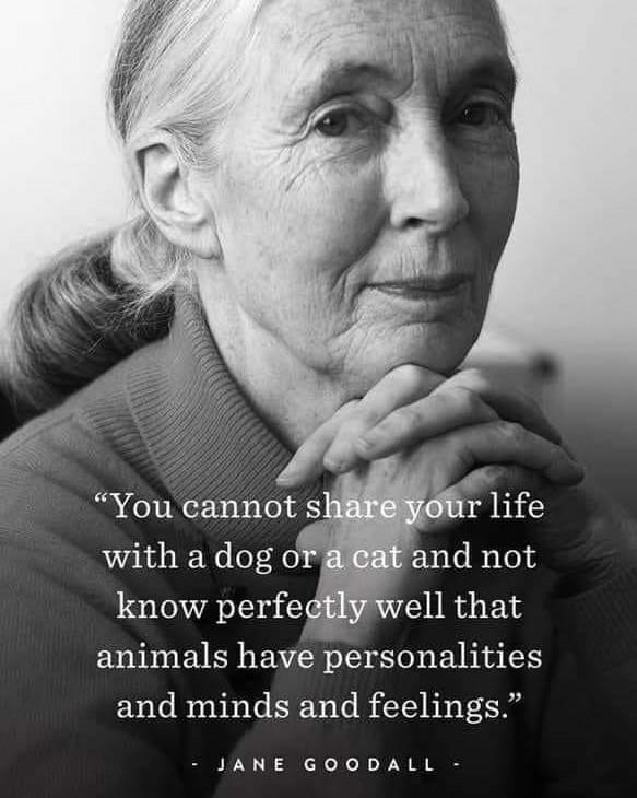"""[583×730] """"You cannot share your life with a dog or a cat and not know perfectly well that animals have personalities and minds and feelings."""""""
