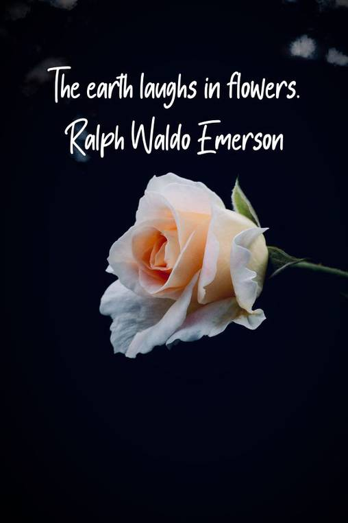 The earth laughs in flowers. –Ralph Waldo Emerson [600×900][OC]
