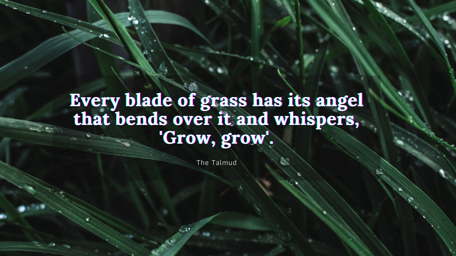 Every blade of grass has its angel that bends over it and whispers, 'Grow, grow'. – The talmud[1920×1080]