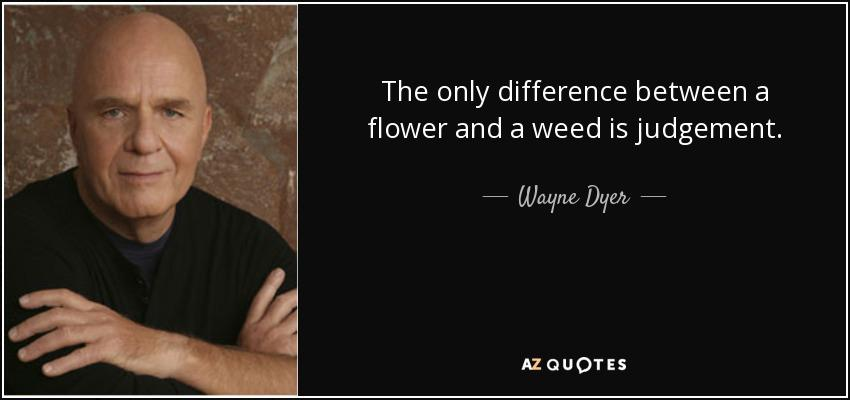 """""""The only difference between a flower and a weed is judgment"""" – Wayne Dyer [850×400]"""