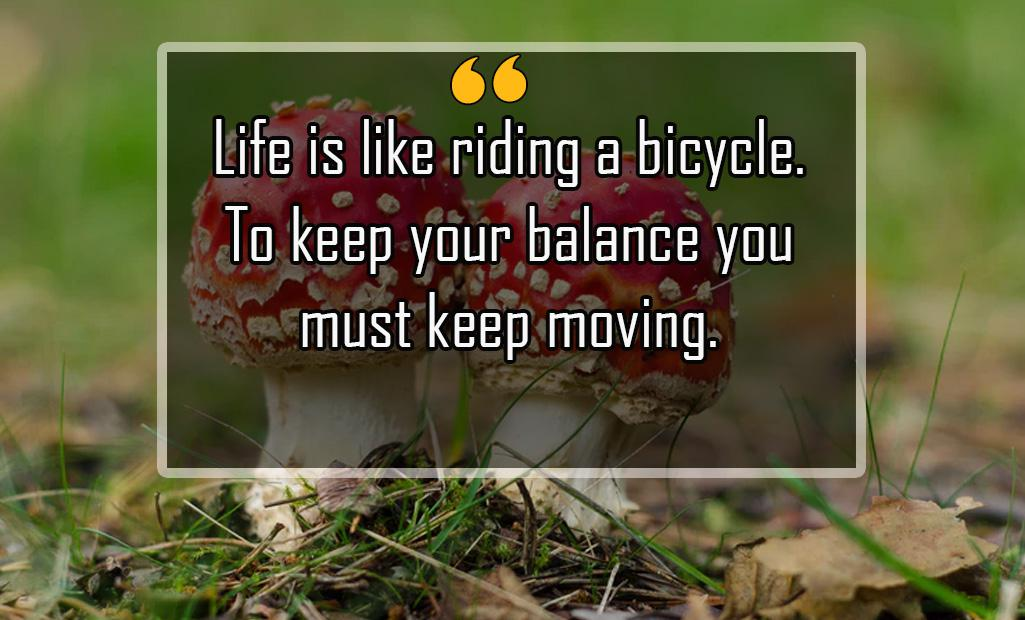 Life is like riding a bicycle. To keep your balance you must keep moving (1025×620)