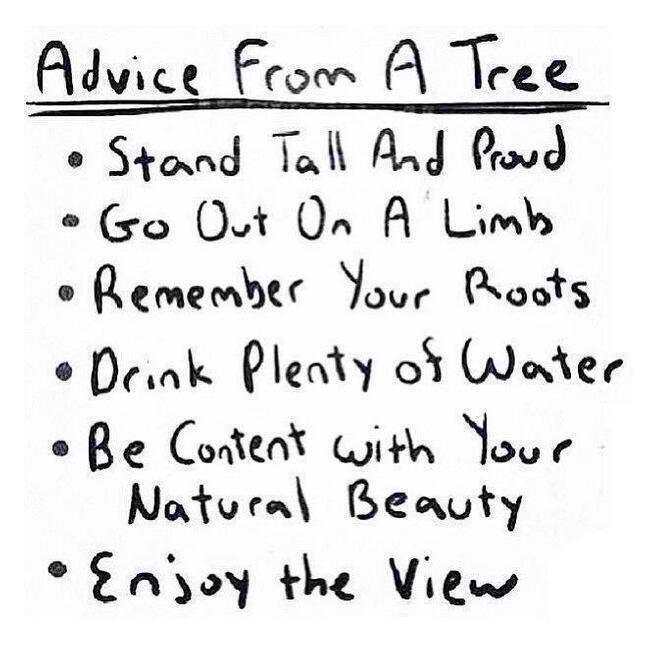[Image] Think Like A Tree