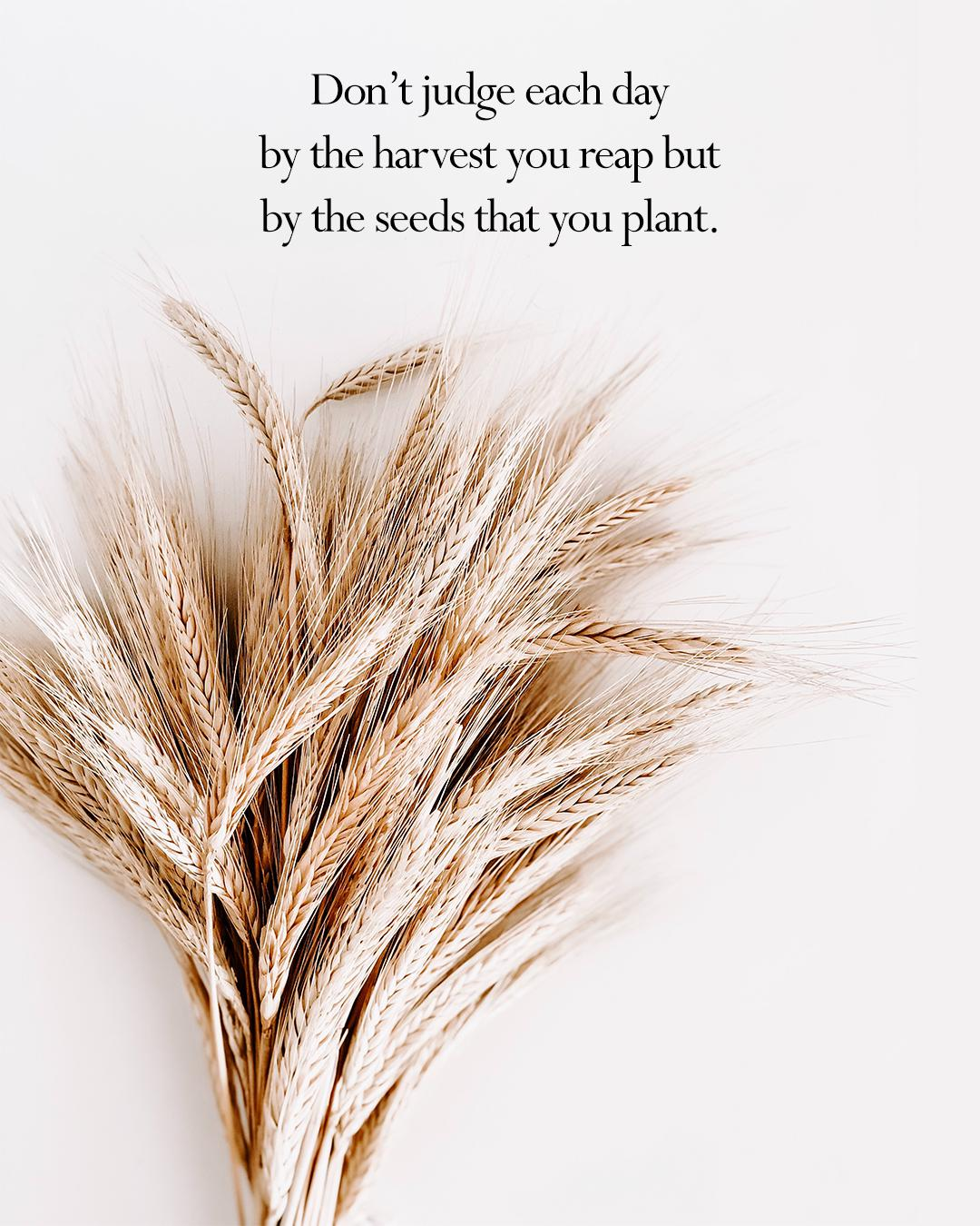 Don't Judge Each Day By The Harvest You Reap But By The Seeds That You Plant. https://inspirational.ly
